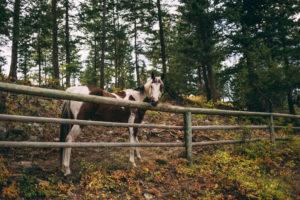 horse-meadow-valley-ranch