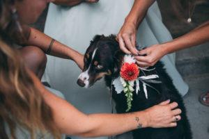 wedding-venu-pets-allowed